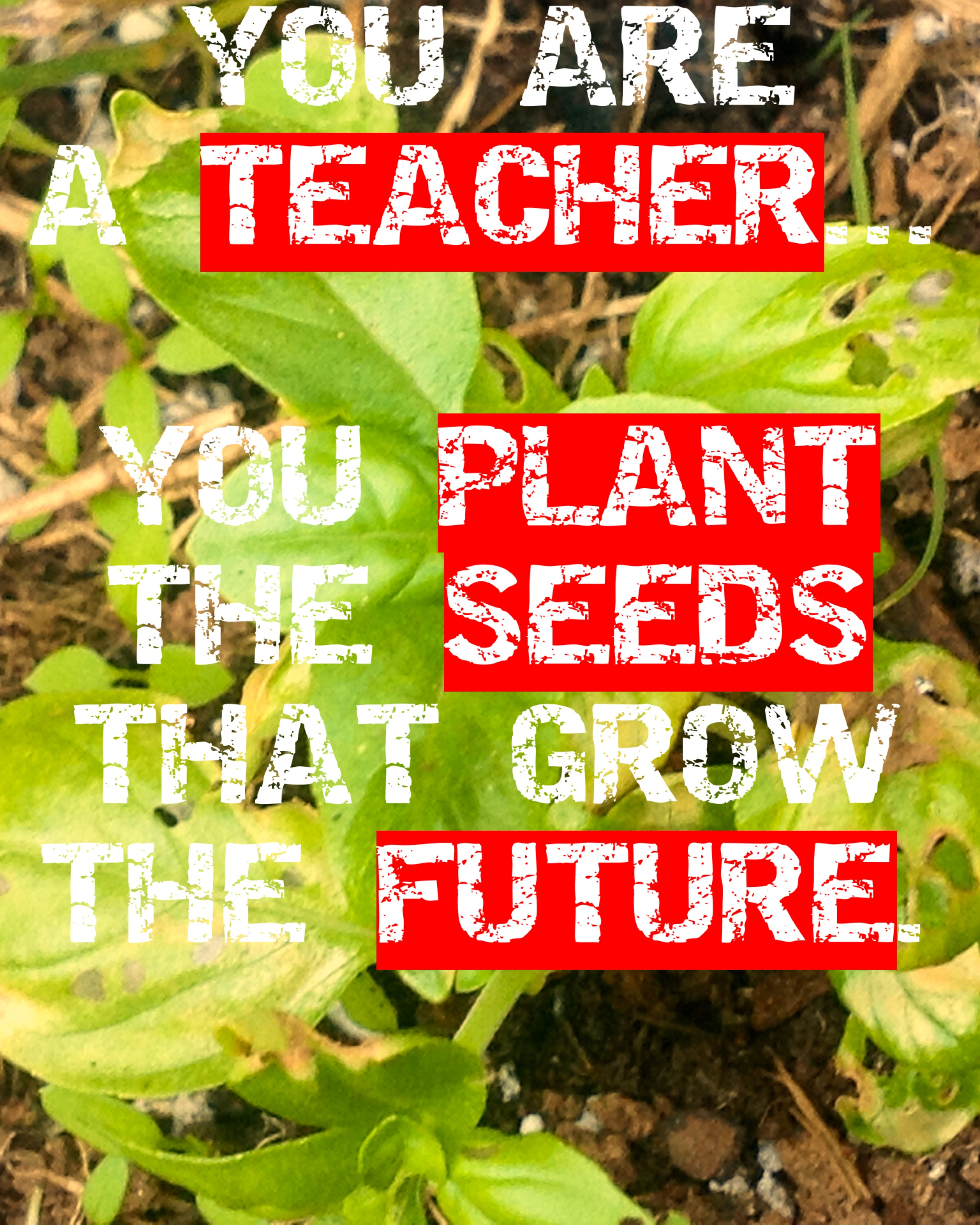 Quotes About Teachers Planting Seeds: (c)DearTeacherLT2013 (You May Use The Image If You Link